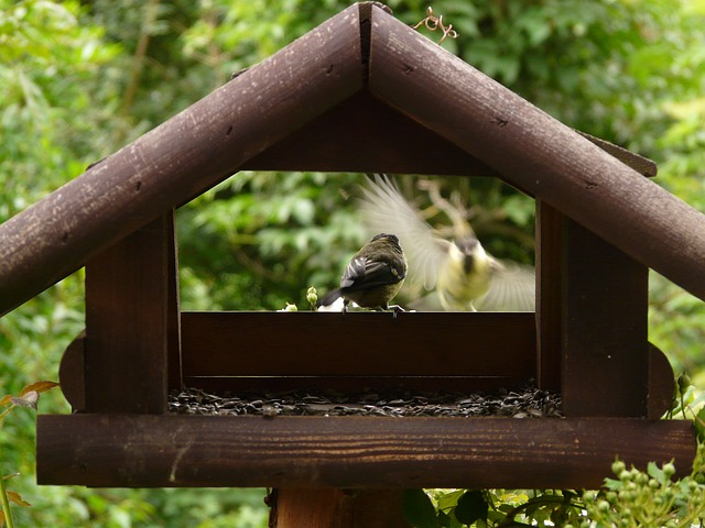 aviary, birds, tit, approach, landing, feed, wood