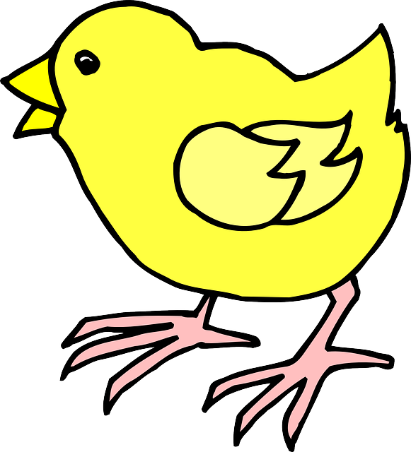 baby, cartoon, farm, bird, chick, animal