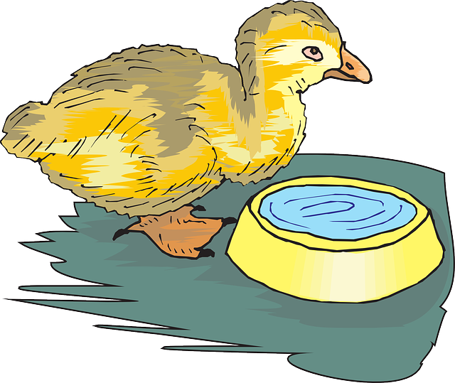 baby, water, bowl, bird, grass, animal, with, duckling