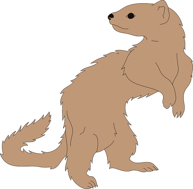 back, brown, looking, standing, tail, fur, ferret