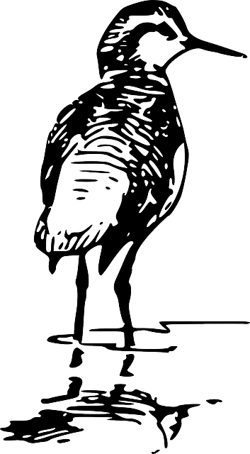 back, view, bird, wings, feathers, breed