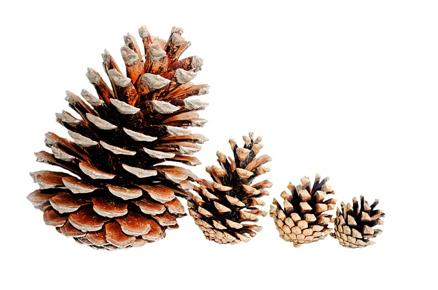 background, big, brown, christmas, cone, conifer