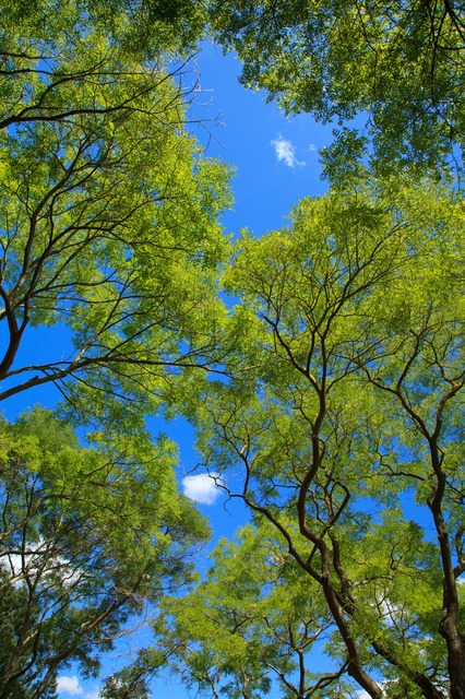 background, blue, branch, canopy, color, environment