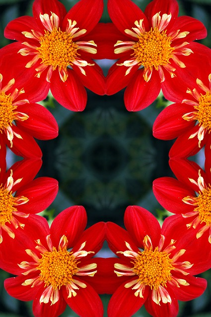 background, floral, flower, red, kaleidoscope, dahlia