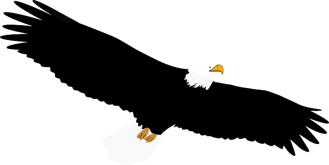 bald, eagle, bird, feather, talon, wing