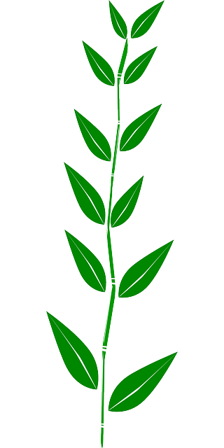 bamboo, leaves, plant, weed