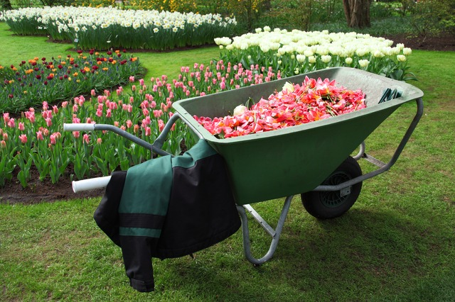 barrow, cart, equipment, flower, garden, gardening