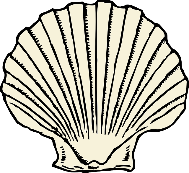 beach, cartoon, fish, scallop, clam, outlines, shell