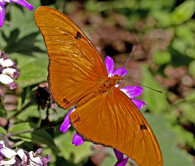 beautiful, orange, butterfly, nature, insect, flower