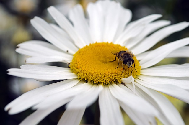 bee, flower, seasons, summer, spring, animal, insects