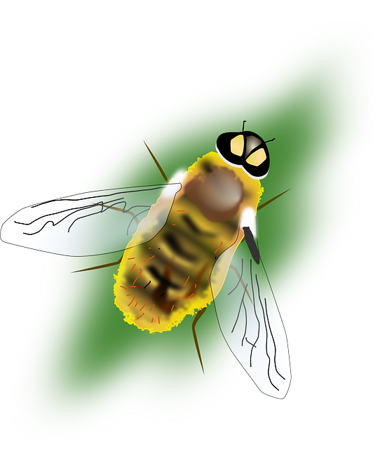 bee, insect, nature, animal, hornet
