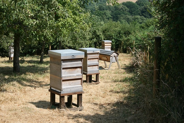 beehives, orchard, grass, trees, summer, sunny