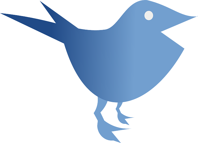 bird, animal, blue