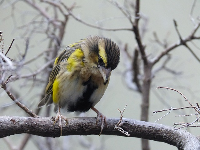 bird, animal, feather, nature, colorful, yellow, black