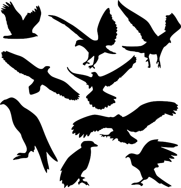 bird, bird of prey, raptor, eagle, fly, hawk, iconset