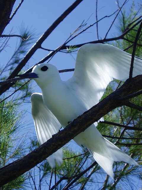 bird, blue-beaked, beautiful, white, perched, tree