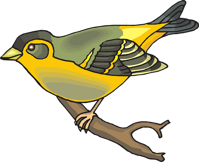 bird, branch, wings, animal, beak, goldfinch, feathers