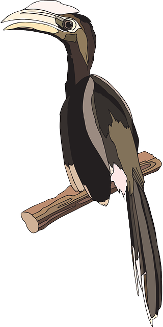 bird, branch, wings, feathers, perched, breed