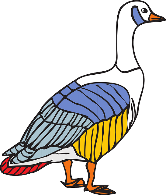 bird, colors, wings, goose, colorful, animal, feathers