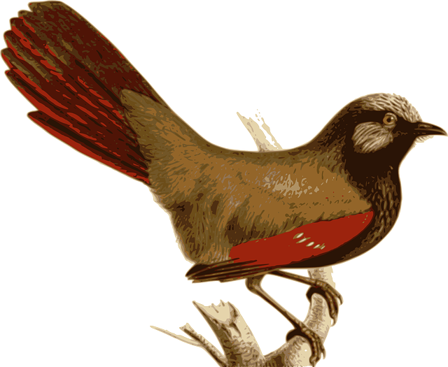 bird, feathers, animal, brown, red, sitting, twig