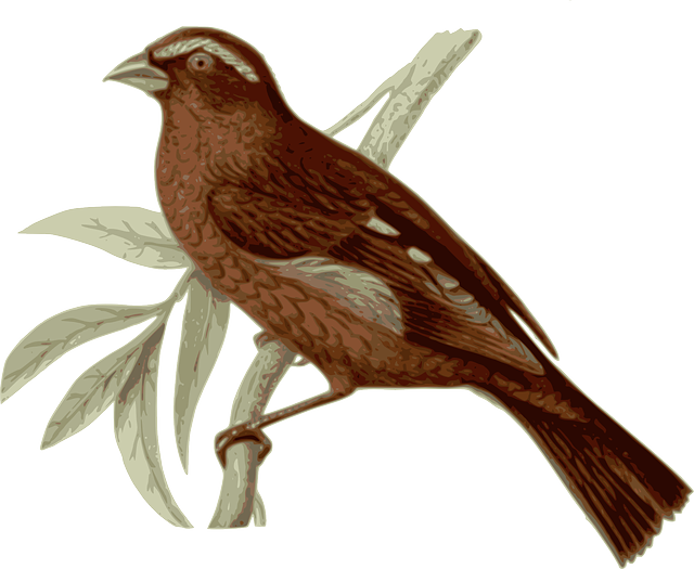 bird, feathers, animal, brown, sitting, twig, branch