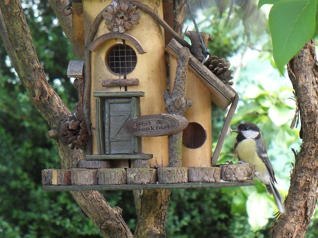 bird feeder, tit, garden