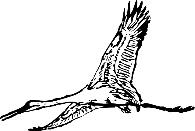 bird, flying, wings, crane, animal, giant, feathers