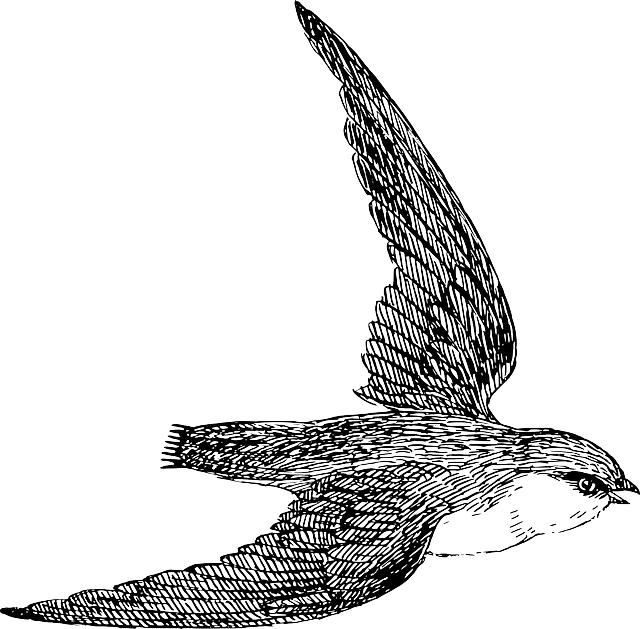 bird, flying, wings, feathers, animal, biology