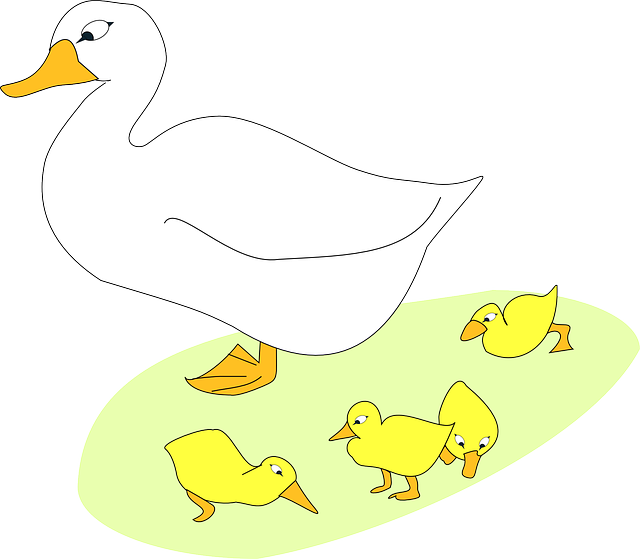 bird, goose, gosling, animal, family