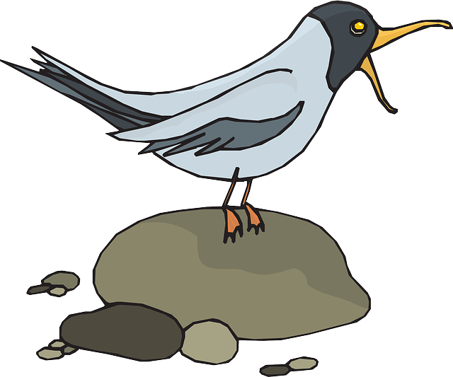 bird, gull, rocks, wings, loud, feathers, screeching
