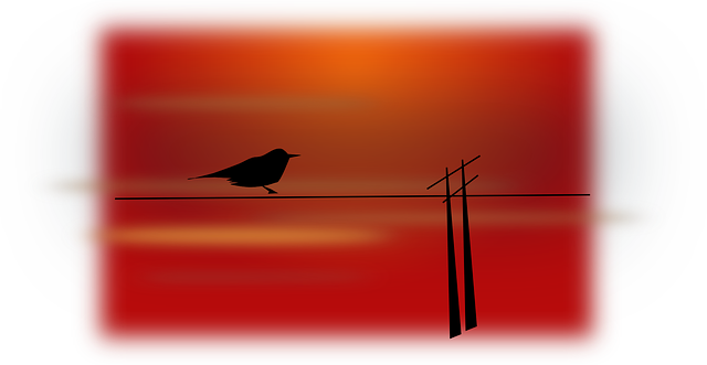 bird, scenery, silhouette, sky, sunset, sitting, dusk