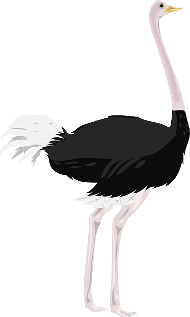 bird, various, ostrich, animal, fast, legs, feathers