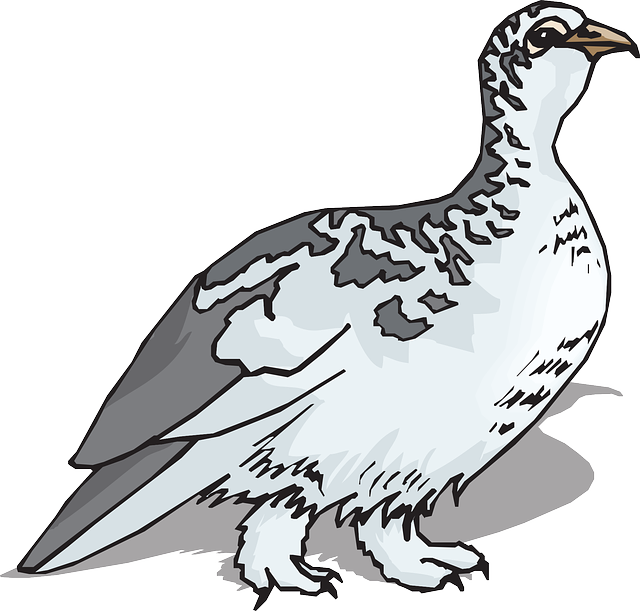 bird, wings, animal, feathers, species, ptarmigan