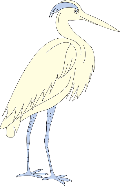 bird, wings, standing, beak, feathers, egret