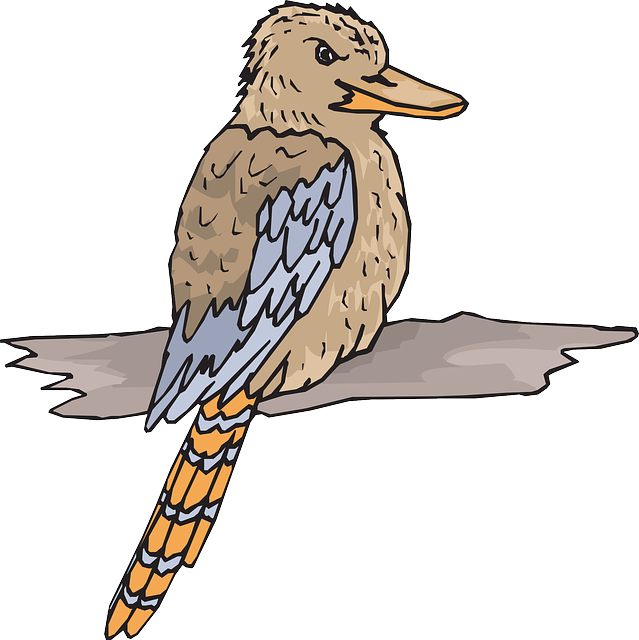 bird, wood, wings, animal, beak, feathers, kookaburra