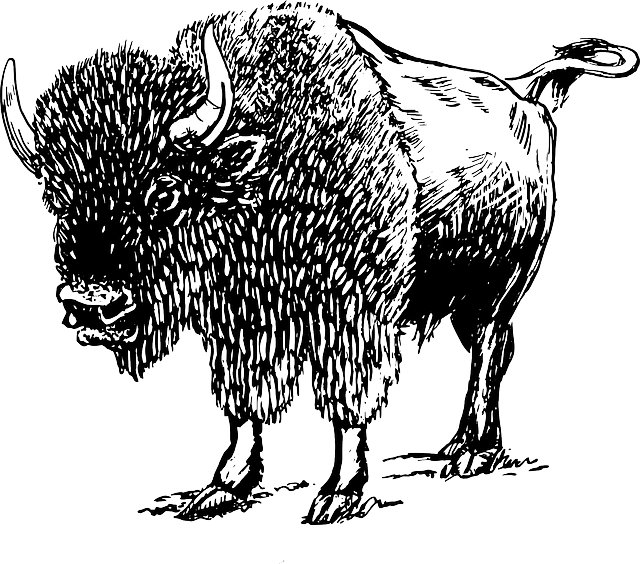 bison, cartoon, wild, horns, animal, mammal, grazer