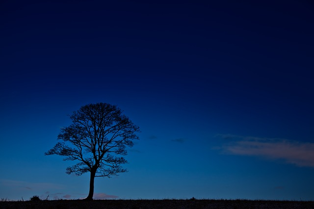 black, blue, branches, dark, dusk, evening, glow