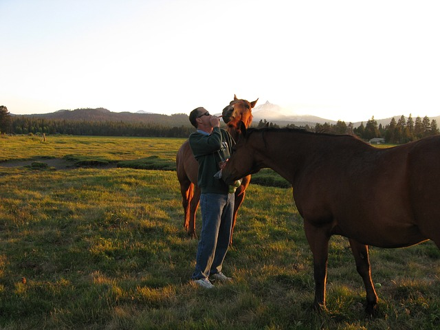 black, butte, ranch, horse, pastoral