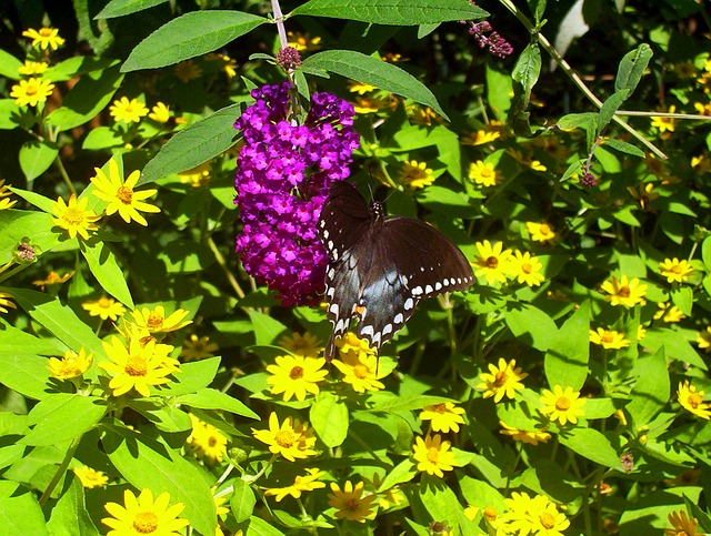 black, butterfly, pink, flowers, summer