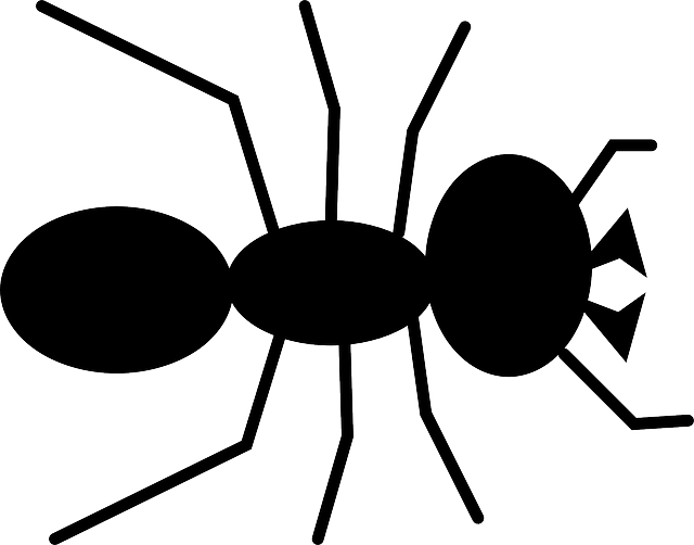black, cartoon, ant, bug, insect, animal