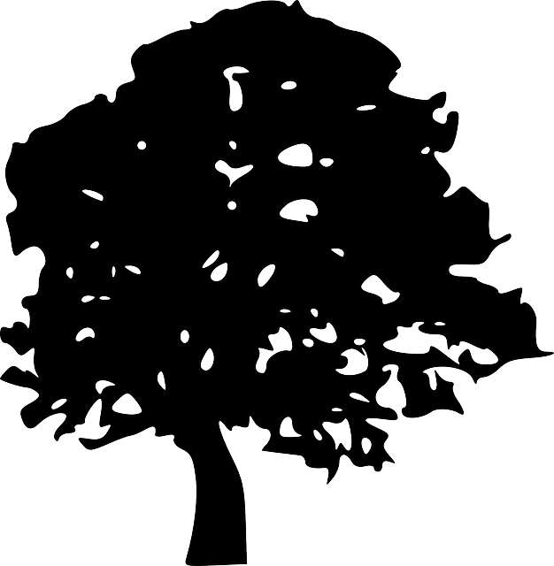 black, evergreen, simple, apple, outline, drawing