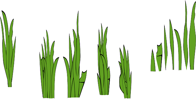 black, green, outline, drawing, white, flowers, cartoon