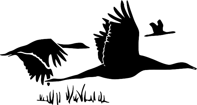 black, outline, canada, drawing, silhouette, white