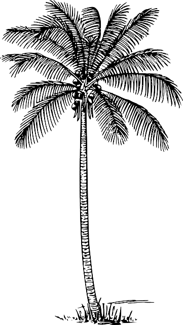 black, outline, drawing, sketch, silhouette, leaf, palm