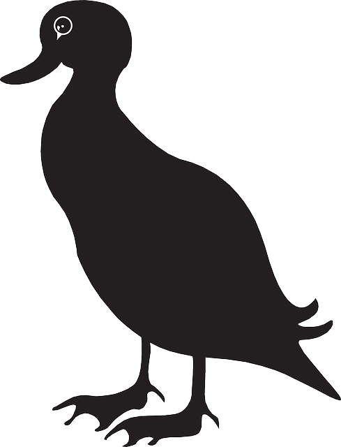 black, silhouette, bird, duck, wings, animal, beak