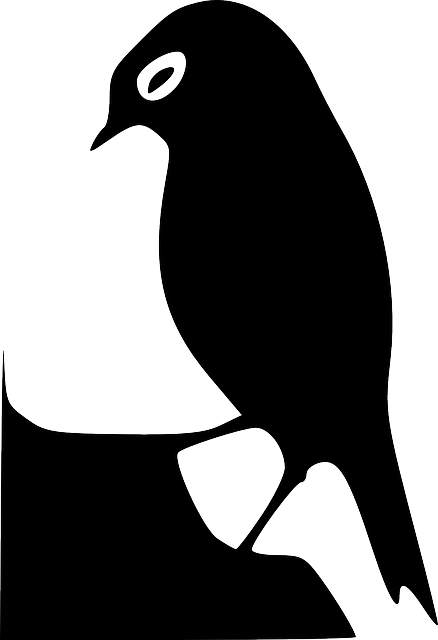 black, silhouette, bird, wings, art, beak, feathers