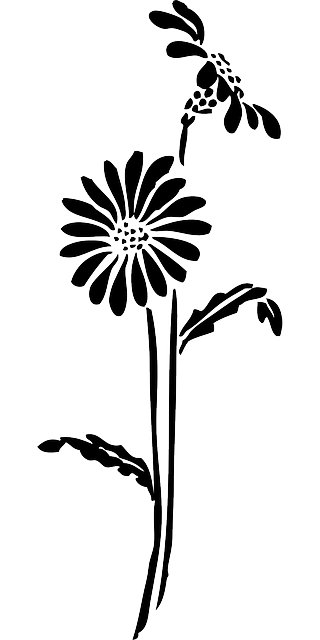 black, silhouette, flower, white, flowers, daisy, plant