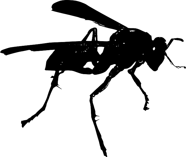 black, white, wasp, wings, insect, fear, and, stinger