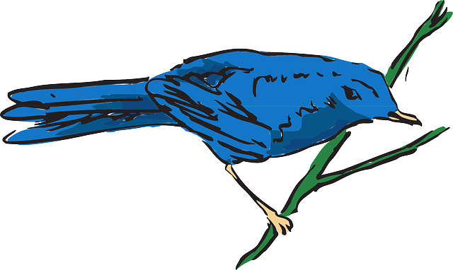blue, bird, wings, animal, stem, feathers