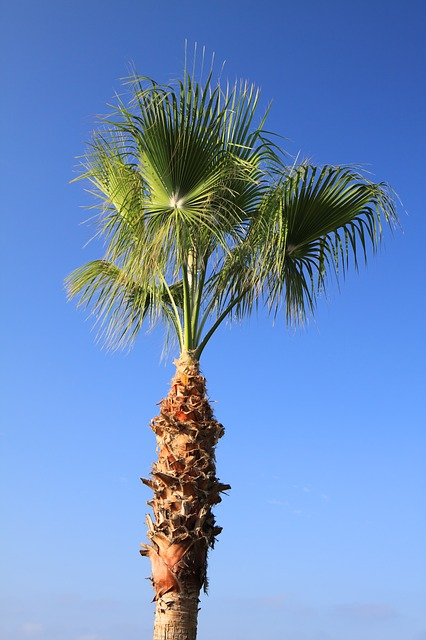 blue, coconut, green, leaf, nature, palm, plant, sky